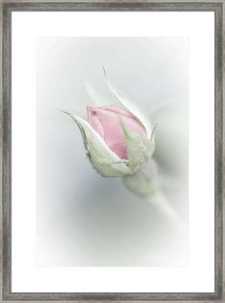 Budding Beauty Framed Print