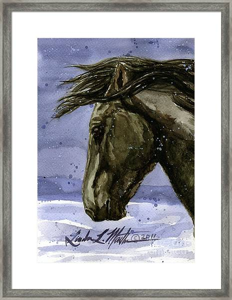 Buddy Bachelor Stallion Of Sand Wash Basin Framed Print