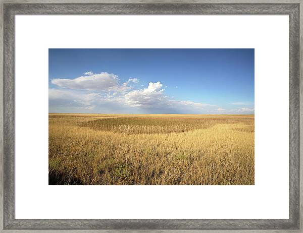 Buffalo Gap National Grassland Framed Print by Peter Falkner/science Photo Library