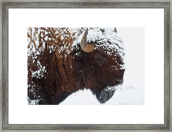 Buffalo Nickel Framed Print