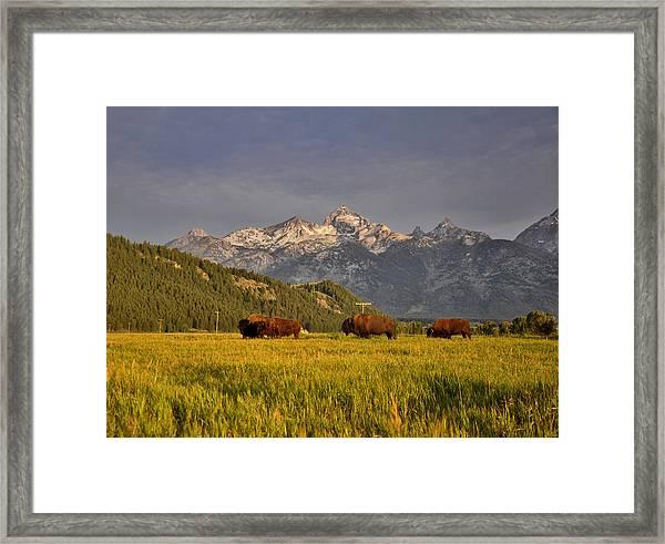 Buffalo Sunrise Framed Print