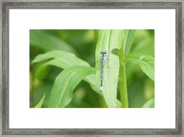 Bug Eyed Monster Framed Print