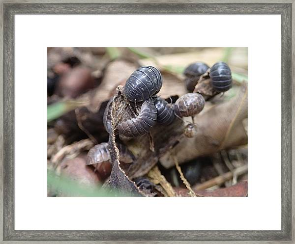 Bug Life Framed Print