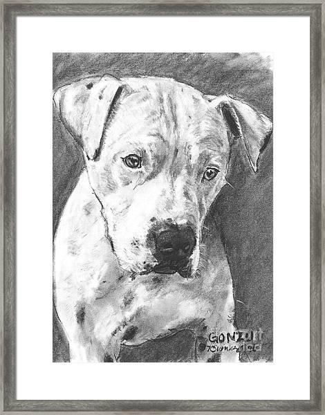 Bull Terrier Sketch In Charcoal  Framed Print