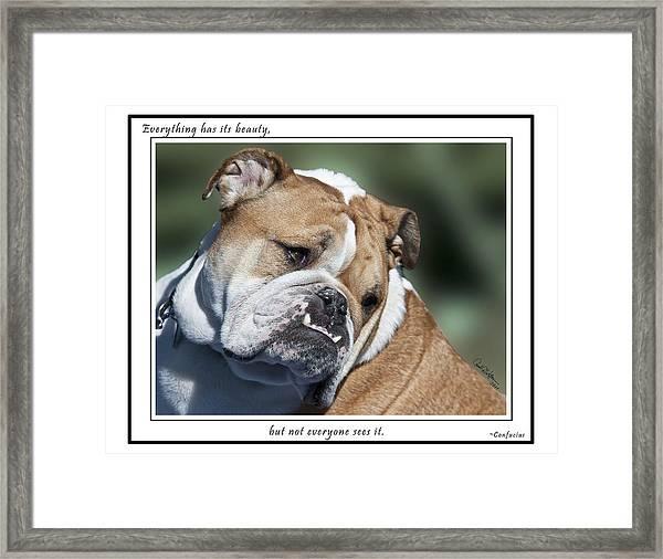 Bulldog Beauty Framed Print