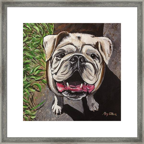 Framed Print featuring the painting Bulldog by Meghan OHare