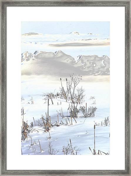 Bulrushes In Snow Framed Print by Carolyn Reinhart