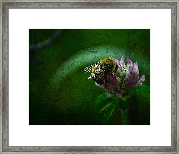 Bumble Bee Tattered Wings Art 2 Framed Print