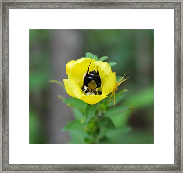 Bumblebee Flower Framed Print