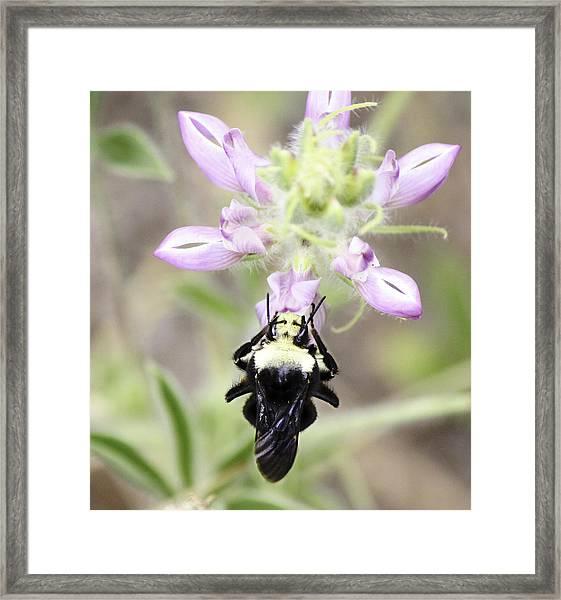 Bumblebee Heaven Framed Print by Luna Curran