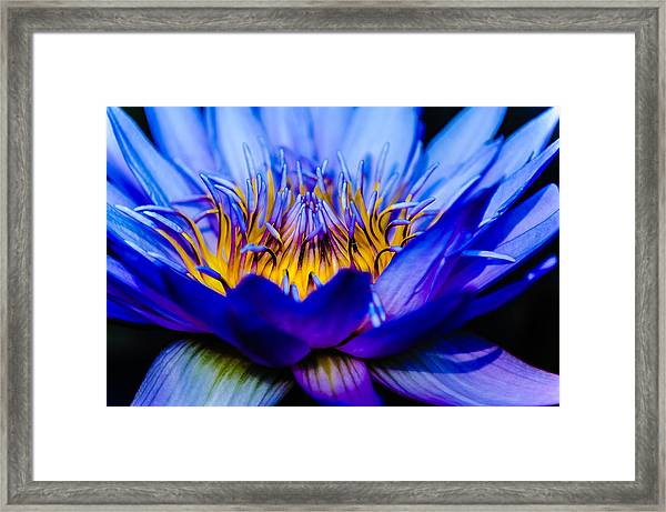 Burning Water Lily Framed Print