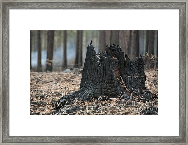 Burnt Tree Trunk Framed Print