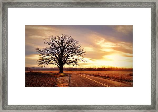Burr Oak Silhouette Framed Print