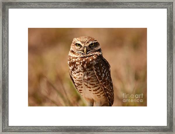 Burrowing Owl Impressions Framed Print