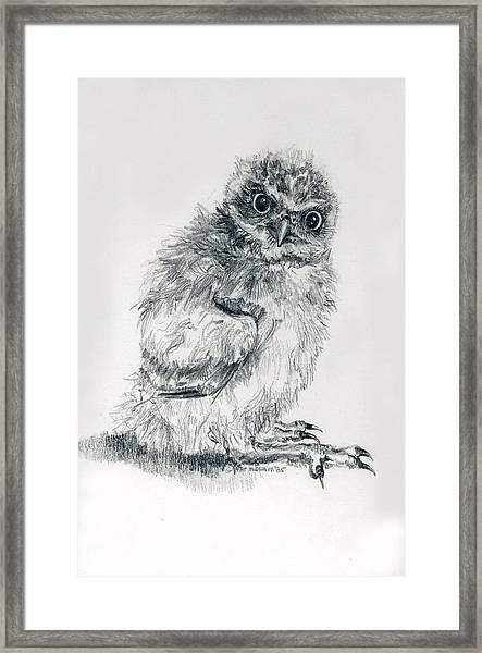 Burrowing Owl Nestlling Framed Print