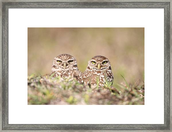 Burrowing Owl Pair Framed Print by Brian Magnier