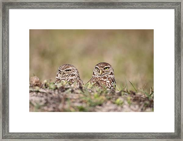 Burrowing Owls Framed Print by Brian Magnier
