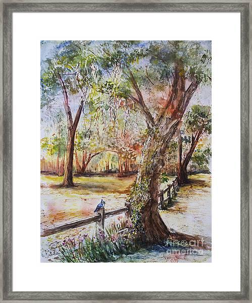 Bushnell Morning Framed Print