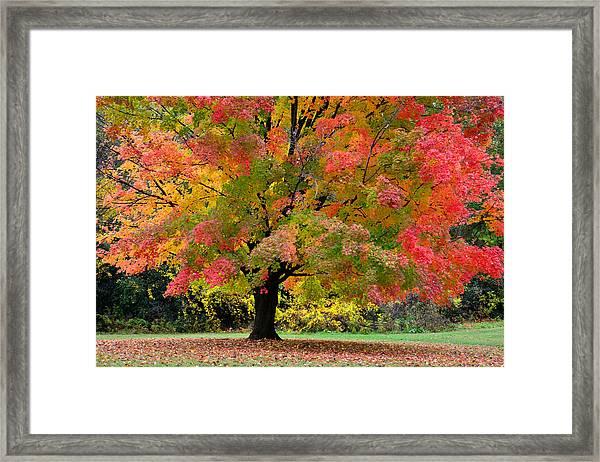 Busse Woods Fall Color Framed Print