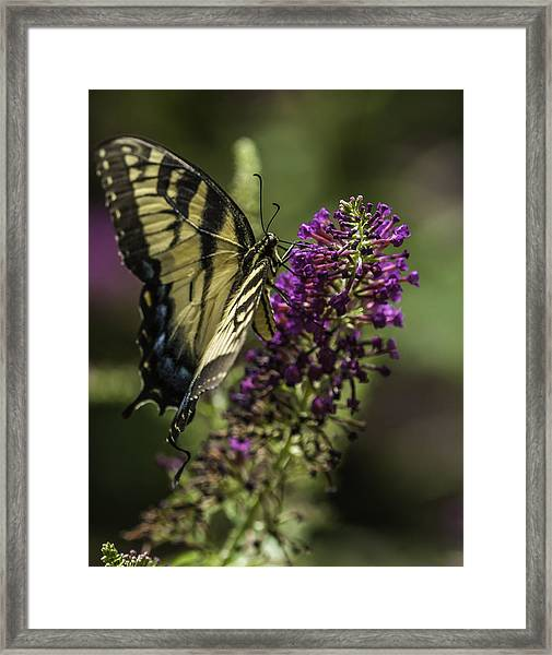 Butterflies Along The Blue Ridge Framed Print