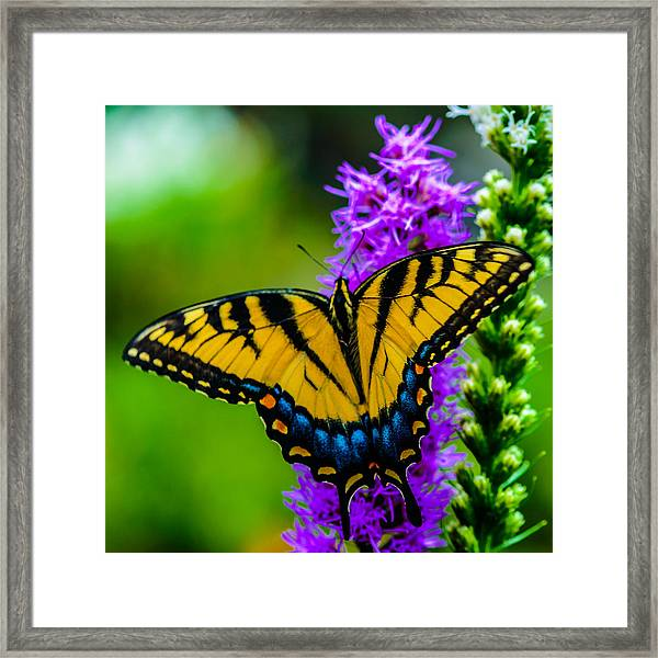 Butterflies Are Free Framed Print