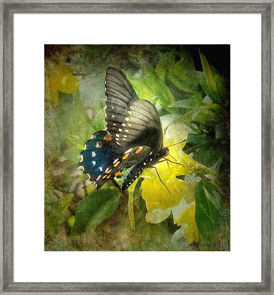 Butterfly And Jasmine Framed Print
