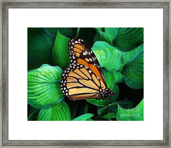 Butterfly Be Still Framed Print