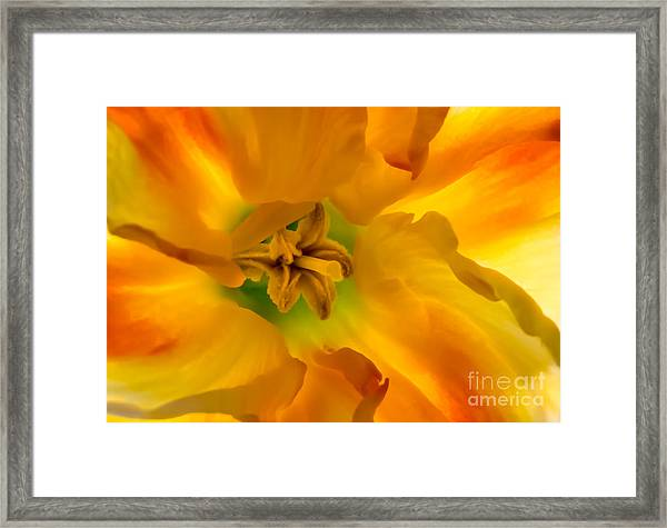 Butterfly Daffodil Springtime Framed Print
