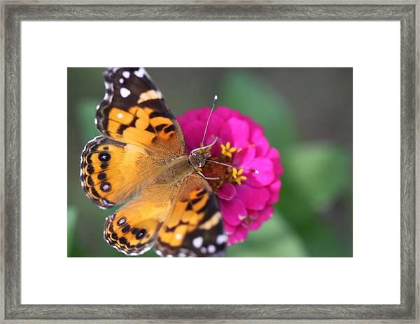 Butterfly Dance Framed Print