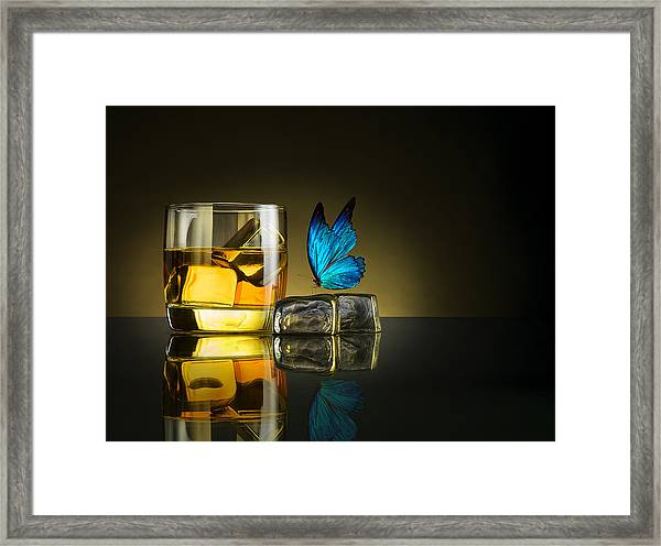 Butterfly Drink Framed Print by Jackson Carvalho