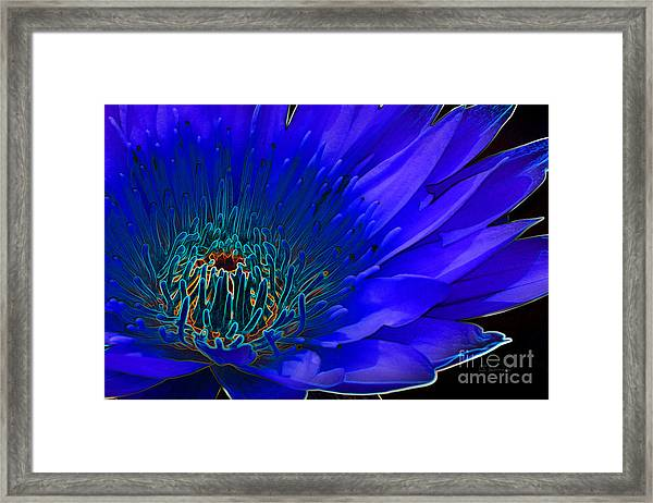 Butterfly Garden 11 - Water Lily Framed Print