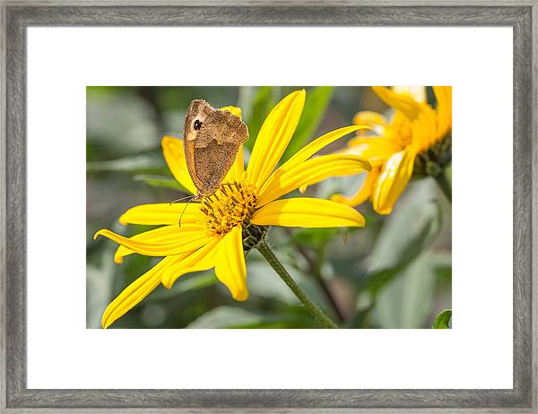 Butterfly. Framed Print