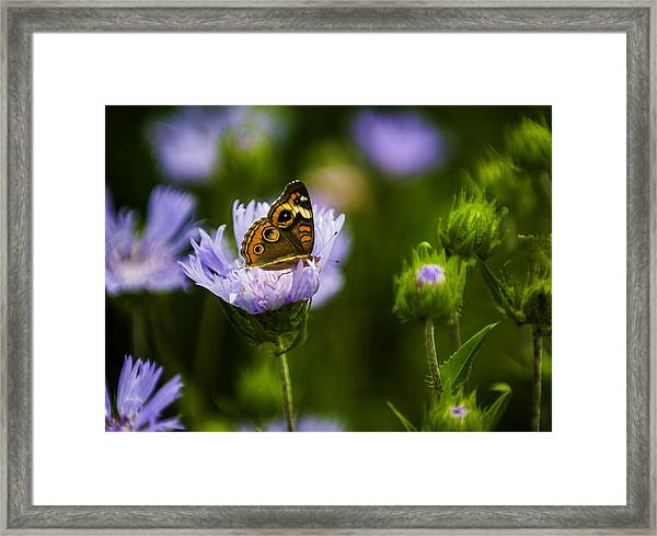 Butterfly In Field Framed Print