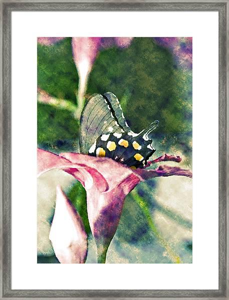 Butterfly In Flower Framed Print