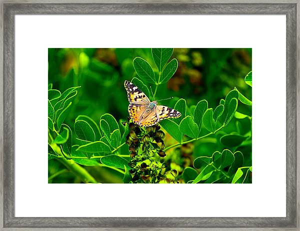 Butterfly In Paradise Framed Print
