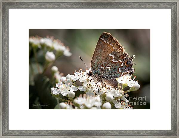 Butterfly In The Garden Framed Print