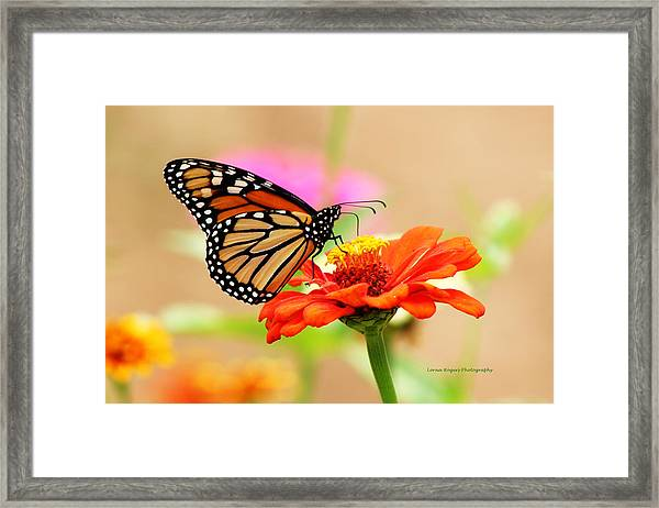 Butterfly Lunch Framed Print
