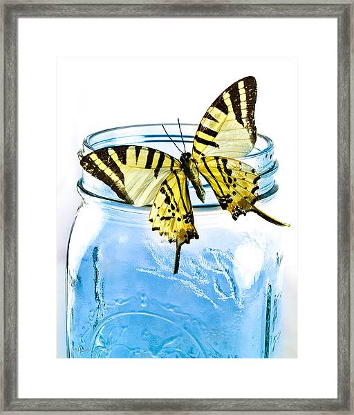 Framed Print featuring the photograph Butterfly On A Blue Jar by Bob Orsillo
