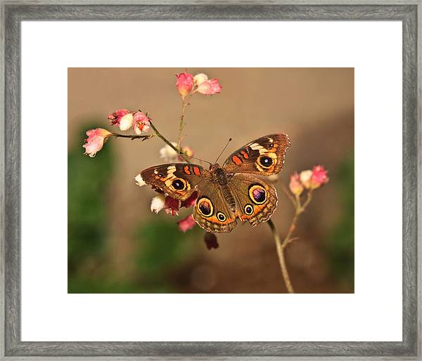 Butterfly On Pink Framed Print