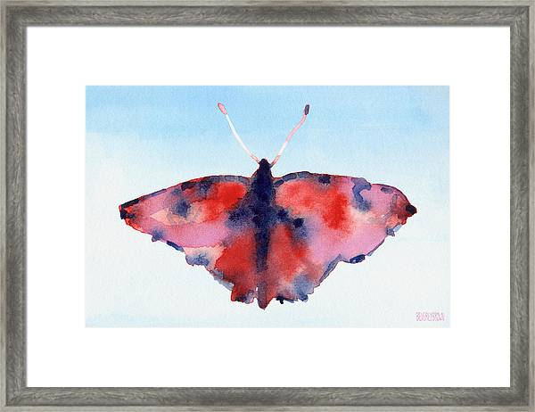 Butterfly Red And Blue Watercolor Painting Framed Print