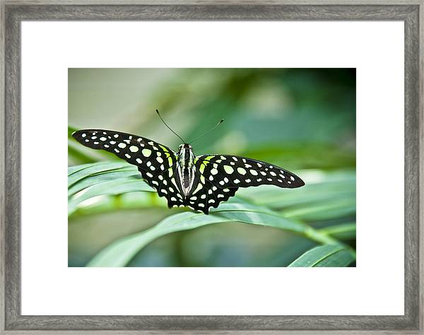 Butterfly Resting Color Framed Print
