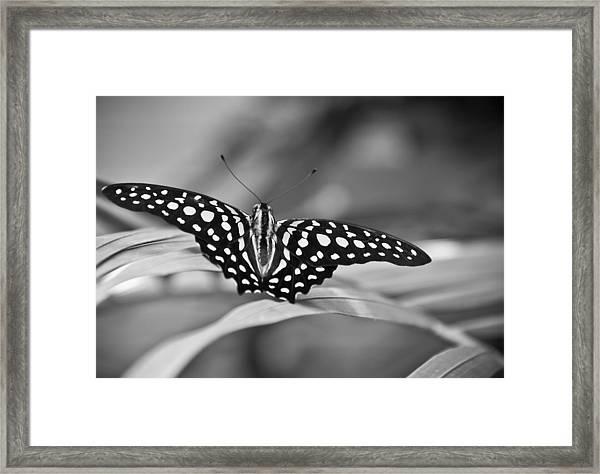 Butterfly Resting Framed Print
