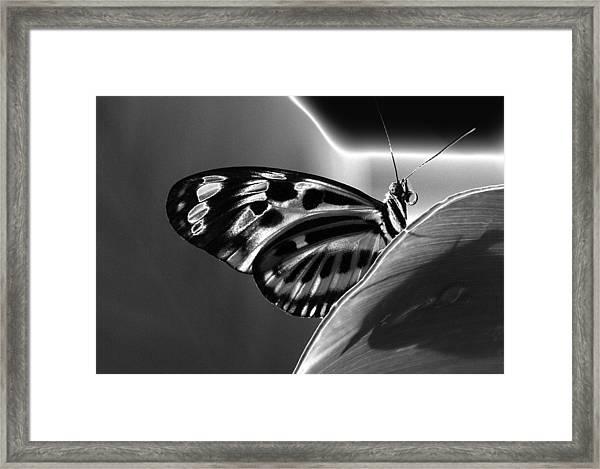 Butterfly Solarized Framed Print