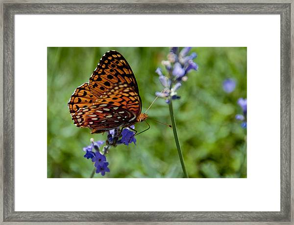 Butterfly Visit Framed Print