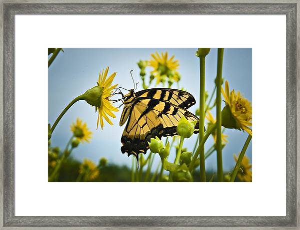 Framed Print featuring the photograph Butterfly by Williams-Cairns Photography LLC