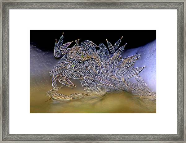 Butterfly Wing Scales Framed Print