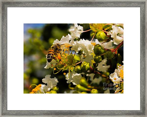 Buzzing Around Framed Print