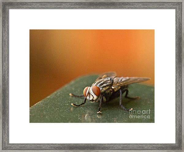 Buzzzzzzz  Framed Print