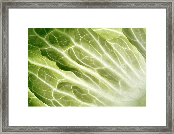 Cabbage Leaf Veins Framed Print by Uk Crown Copyright Courtesy Of Fera/science Photo Library