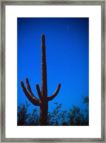 Cactus And Moon Framed Print